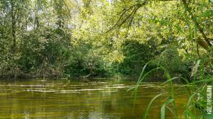 Река Нара в Папино