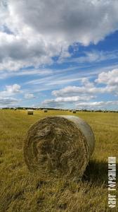 Стог сена в поле 6